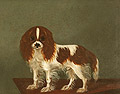 Cavalier King Charles Spaniel on the Table