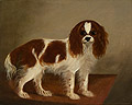 Standing King Charles Spaniel