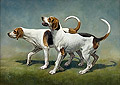 Two Foxhounds