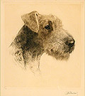 Airedale Head Study