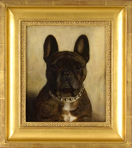 Brindle French Bulldog Head Study