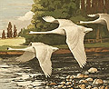 The River Swans
